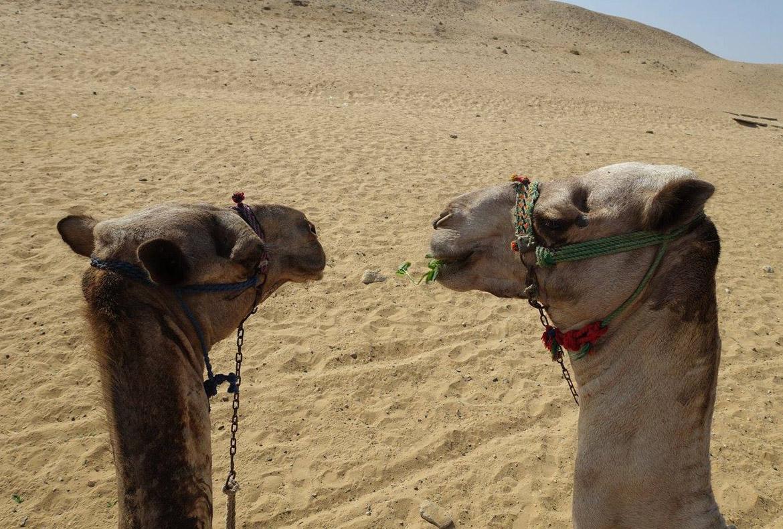 Camel-Riding-on-the-Giza-Plateau