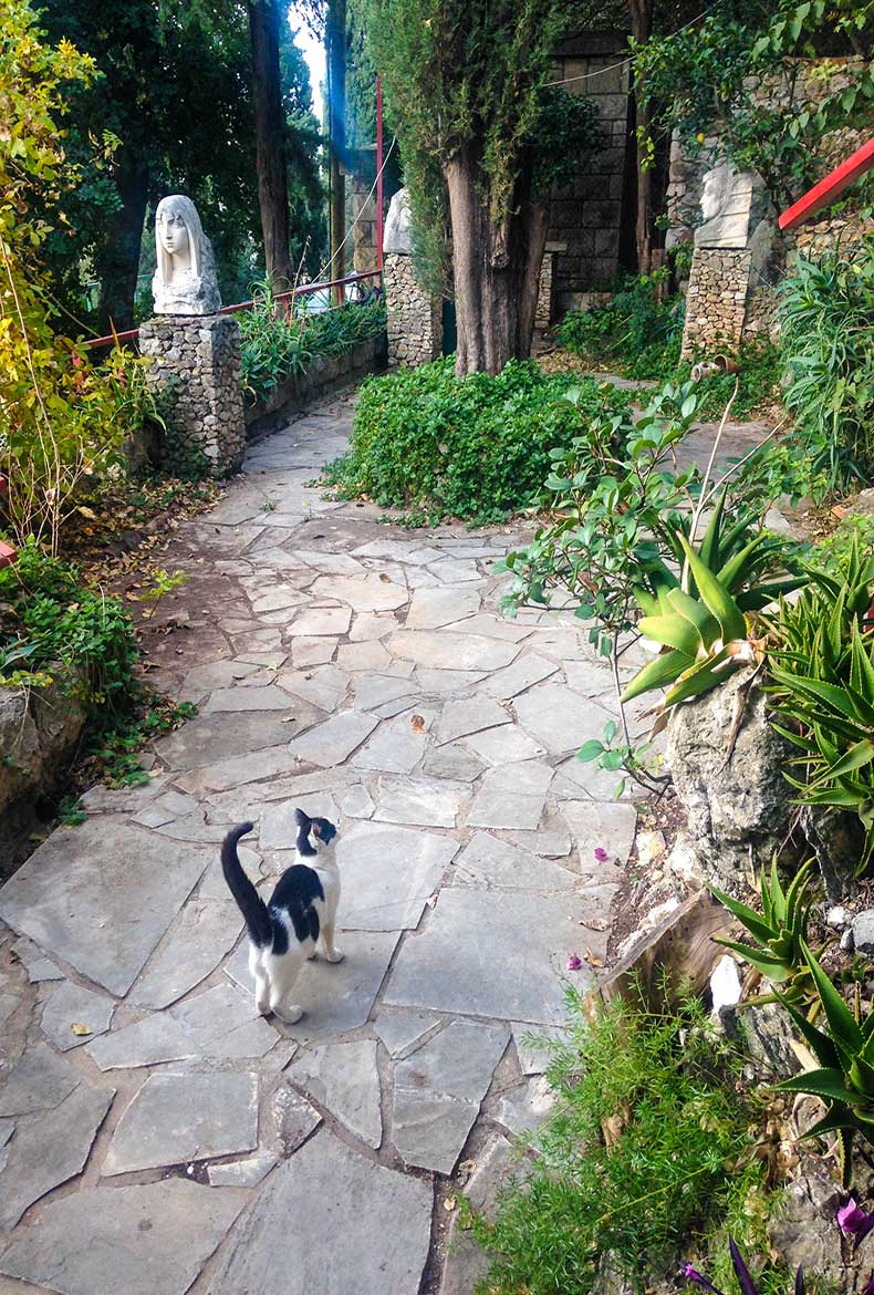 Cats-at-the-Gallery-Cobra-Apartment-Garden-in-Dubrovnik-Croatia